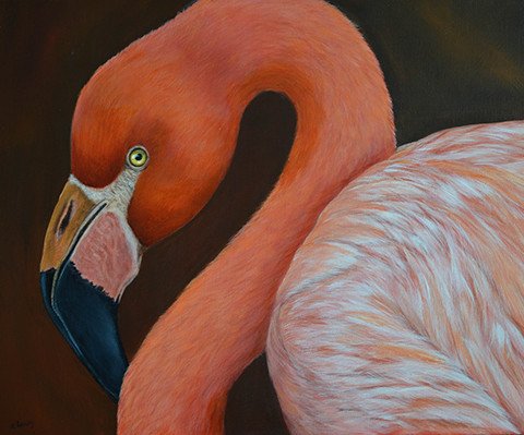 Flamingo-Pretty-in-Pink-0303-1-of-1-480x399