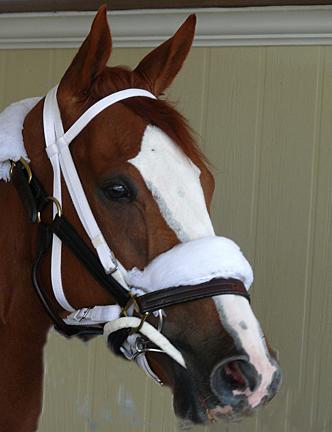 11x14 Beautiful Horse - Face heal