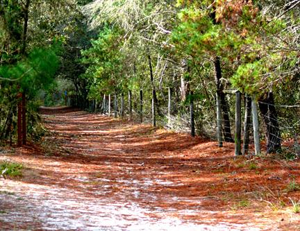 A Peaceful Path Starkey Park Florida
